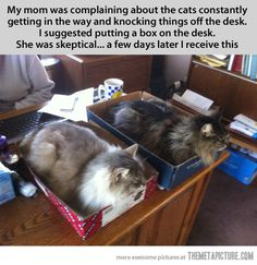 The cat traps worked…