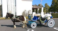 PONY WEDDING CARRIAGE