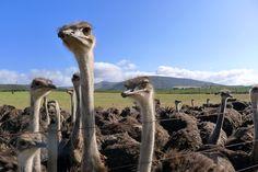 Wundernasen... Camel, Animals, Animales, Animaux, Camels, Animal, Bactrian Camel, Animais