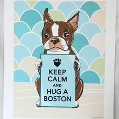 Love Boston Terriers