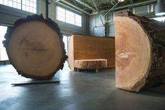 What the inside of a 300-year-old tree looks like!