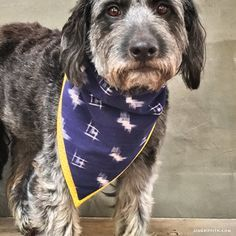 Dog bandana pattern not really necessary to have a pattern but give your four legged friends some style by making your own diy dog bandana solutioingenieria Gallery