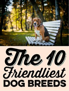 The 10 friendliest dog breeds!