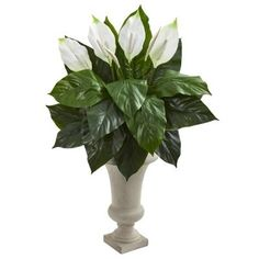 With its stately urn vase and showy white lilies, the Nearly Natural Artificial Spathiphyllum in Sand Colored Urn makes an elegant statement on. Silk Plants, Foliage Plants, Faux Plants, Topiary Trees, Potted Trees, Artificial Boxwood, Artificial Plants, Ficus Tree, Floor Plants