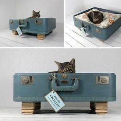 Make pet beds out of old suitcases. I have lots of old suitcases. Diy Pet, Diy Cat Bed, Pet Beds, Dog Bed, Best Suitcases, Gatos Cats, Pet Furniture, Animal Projects, Pet Home