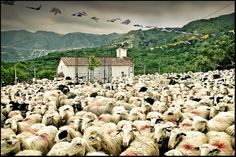 Every year on the name day of Saint George, the shepherbs of Asi Gonia in Crete bring their sheep from the mountains so that the priest of the village blesses them with this red mark. Crete Island Greece, Saint George, Holy Land, Greek Islands, Priest, Counting, Sheep, Dolores Park, Beautiful Places