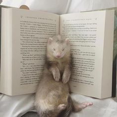Draco fell asleep in the book. It's not a pillow it's for reading not sl… Draco fell asleep in the book. It's not a pillow it's for reading not sleeping ya bloody ferret! Cute Creatures, Beautiful Creatures, Animals Beautiful, Pretty Animals, Cute Baby Animals, Animals And Pets, Funny Animals, Tier Zoo, Pet Ferret