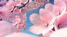 How to Make Cherry Blossom Flowers  http://www.blenderguru.com/videos/how-to-make-cherry-blossom-flowers/  #blender #3d #tutorial