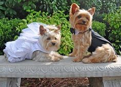 Dog Wedding Dress Set w/ Veil and Leash