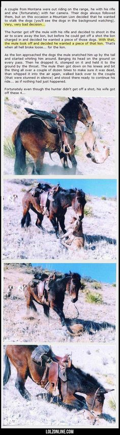 A Couple From Montana Were Out Riding#funny #lol #lolzonline