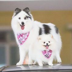 Singapore   Dog Harness   Personalized Dog Bandana   Custom Bowtie Custom Dog Tags, Cat Bow Tie, Pet Tags, Dog Bowtie, Dog Harness, Dog Bandana, Dog Accessories, Cute Dogs, Singapore