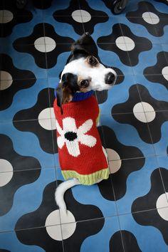 Mochila Bolsa Pet Gato Cachorro Cães Astronauta Wish
