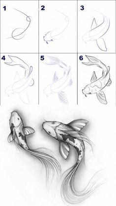 Ideas for home - Tiere zeichnen - Zeichnungen Easy Pencil Drawings, Fish Drawings, Art Drawings Sketches, Cute Drawings, Sketch Art, Koi Fish Drawing, Hand Drawings, How To Sketch, Pencil Drawings For Beginners