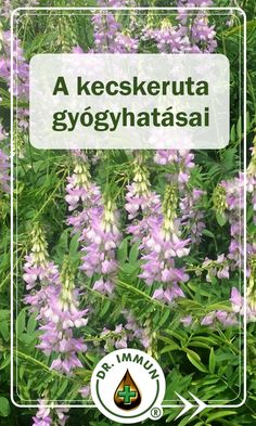 Natural Remedies, Herbalism, Health And Beauty, Blessed, Cooking, Nature, Plants, Lawn And Garden, Herbal Medicine