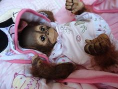 reborn monkey on ebay