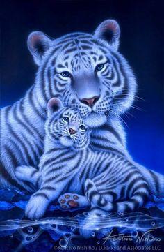 Ga& ry beauty g or over Oh rt your f Kentaro Nishino Wild Animal Wallpaper, Cute Cat Wallpaper, Tiger Wallpaper, Mystical Animals, Mythical Creatures Art, Big Cats Art, Cat Art, Beautiful Cats, Animals Beautiful