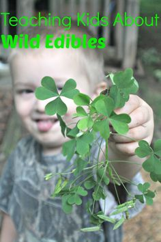 Blessed In Homemaking: Foraging For Wild Edibles With Kids