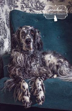 Oh, those spots and those curls! Portrait of a Ryman English Setter by Pouka Fine Art Pet Portraits.
