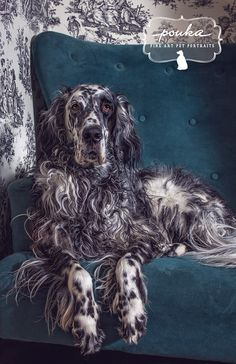 Oh, those spots and those curls! Portrait of a Ryman English Setter by Pouka Fine Art Pet Portraits.