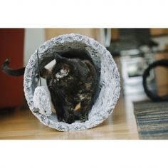 Get this Purr & Pounce Cat Tunnel from SkyMall.com for your cat!