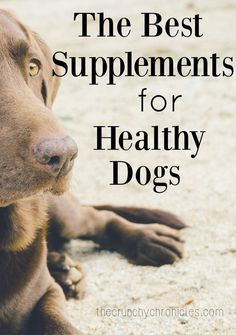 Wondering how to naturally care for your dogs so they stay healthy? Navigating the best supplements for dogs can be tough. I have three dogs and have narrowed down the supplements that work great for them!