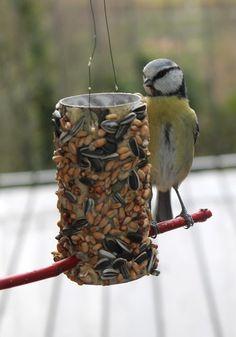 #DIY bird feeder