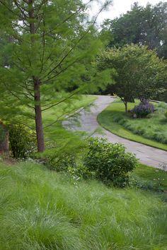 A meadow of Papaver rhoeas, the Flanders Poppy, Salvia nemorosa 'Caradonna' and Oenothera speciosa spill down the hill toward The Pond. Chanticleer, US
