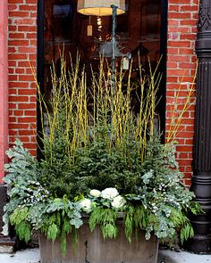 Winter planter with yellow dogwood, spruce, cedar, fir and flowering kale accents.