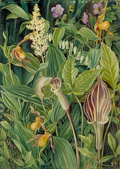 Wild Flowers from the Neighbourhood of New York . by marianne north . http://en.wikipedia.org/wiki/Marianne_North
