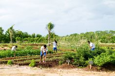 10 voluntourism trips that will actually make a difference Sustainable Farming, Sustainable Development, Urban Farming, The Eighth Day, Growing Herbs, The Locals, Hospitality, Trip Planning, The Good Place