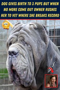 #Dog #Birth #Pups #Owner #Rushes #Vet #Breaks #Record