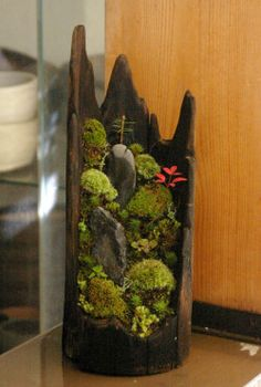 Moss bonsai 小さな世界で雄大な景色を【苔盆栽(流木) 作家 木村日出資氏】