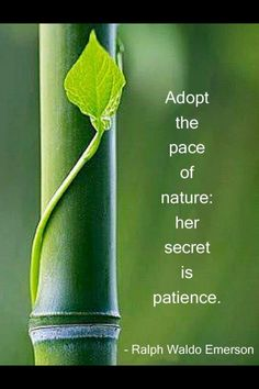 Learn from Nature about Patience