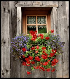 Window by ayrtonrezzafrdasilva, via Flickr