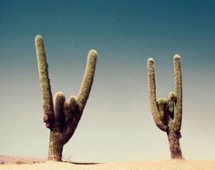 blue, bright, brown, cactus, cactuses, colors, desert, dull, green, hand signs, hands, plant, plants, sand, sky, tan