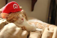 cosplay,cat,munchikin,kiku,Mario,cap