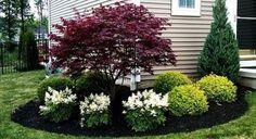Front Yard Evergreen Landscape Garden 1
