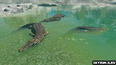 This mod is not currently available Skyrim 5, Crocodiles, The Province, Water, Animals, Gripe Water, Animales, Crocodile, Animaux