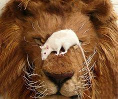 食物連鎖を超えた動物たちのスリル満点なコミュニケーション - GIGAZINE
