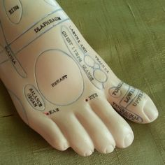 This is a foot reflexology model of the right foot.
