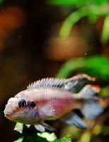 http://ryby-akwariowe.blogspot.com/ ryby akwariowe Złote zasady akwarystyki dla was