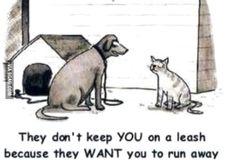 Dog explaining life to a cat... - 9GAG