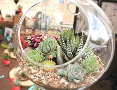 wonderful succulent terrarium.