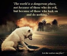 Wisdom Quotes, True Quotes, Great Quotes, Inspirational Quotes, Motivational, Lone Wolf Quotes, Pomes, Wolf Spirit Animal, Native American Quotes