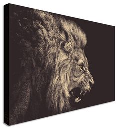 Lions Pride by Animal Art Canvas Printers, Canvas Art Cheap Prints by www.canvastown.co.uk