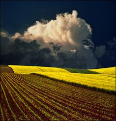 Yellow field by -jup3nep