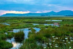 The Wakkerstroom wetland at sunset. Great Places, Places Ive Been, Where The Sun Rises, Story People, The Republic, South Africa, Safari, Sunrise, Wildlife