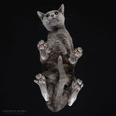 Photos Of Cats Taken From Underneath by Andrius Burba