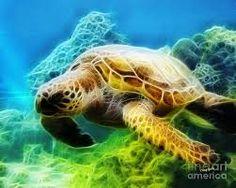 fractal turtle