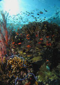 Menjangan Island, Bali | Flickr - Photo Sharing!